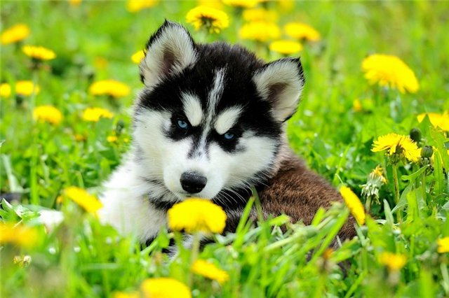 У вас все еще есть желание завести собаку ?