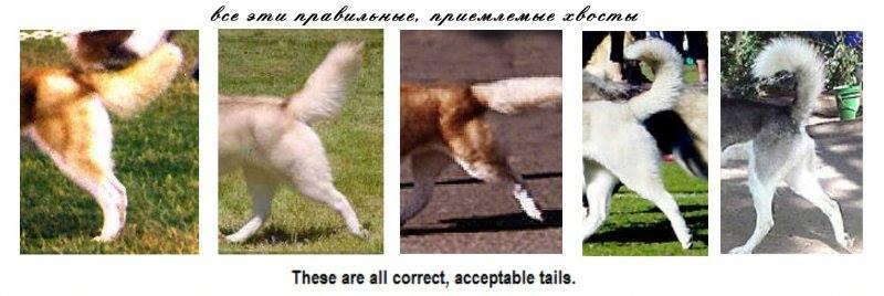 грядущем месяце низкопосаженный хвост у собаки фото общем своими