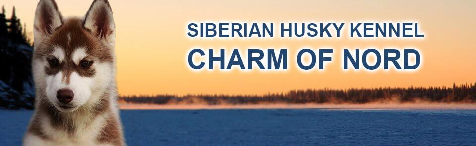 Siberian Husky Kennel