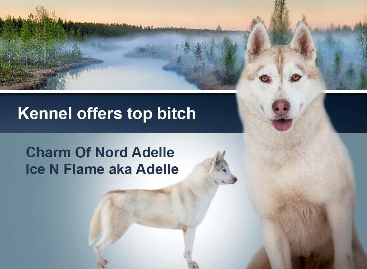 Charm Of Nord Adelle