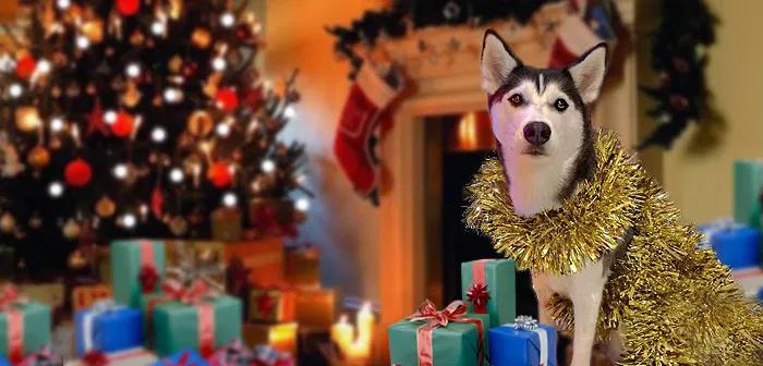 подарки для собаки хаски